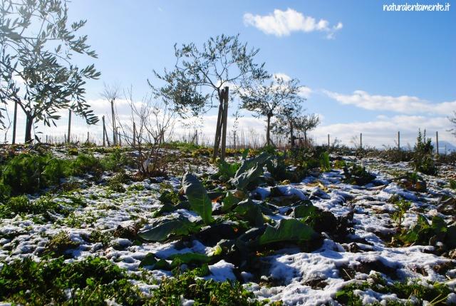orto con la neve 1