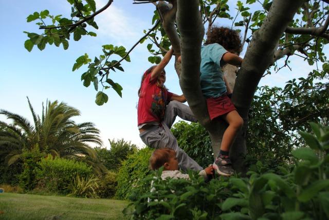 7 decrescita -bambini sull'albero