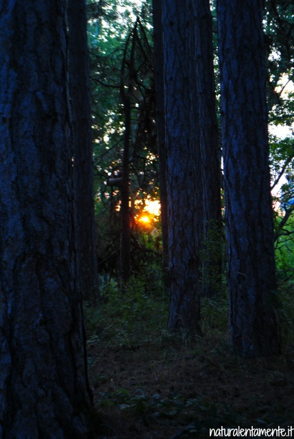 tramonto pineta