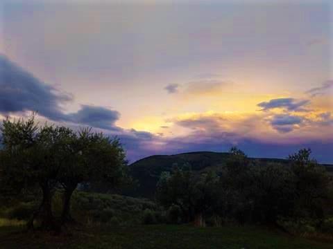tramonto con ulivo