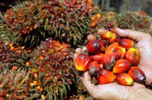 boicotta olio di palma