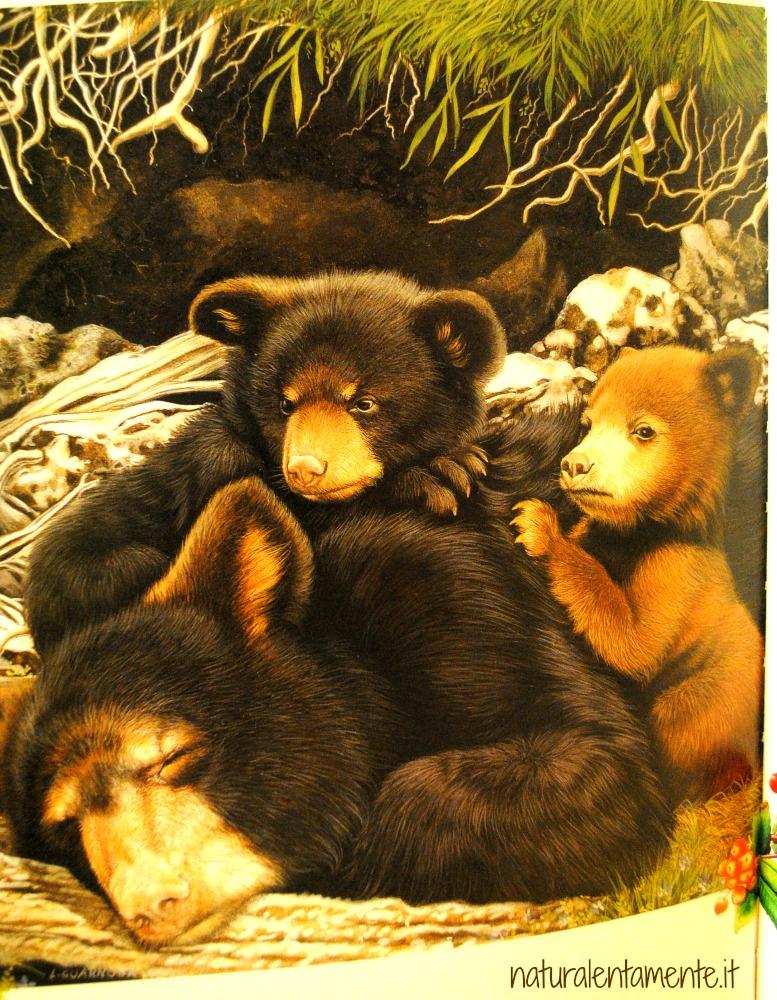 noi siamo orsi