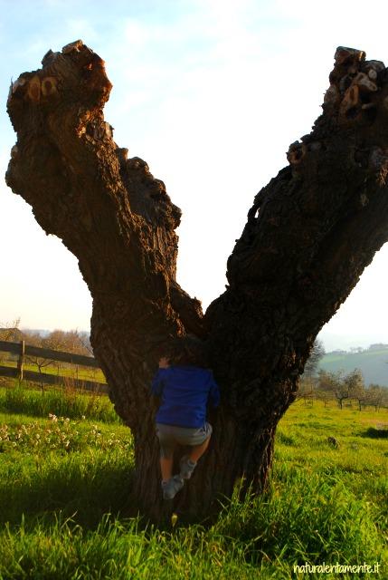arrampica-alberi