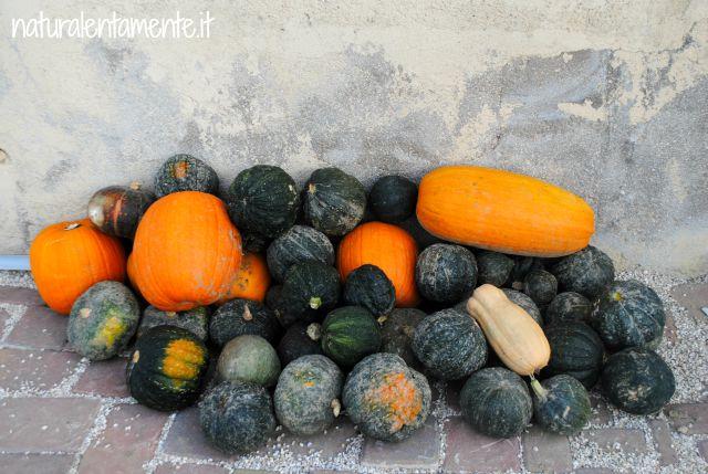 raccolto zucche