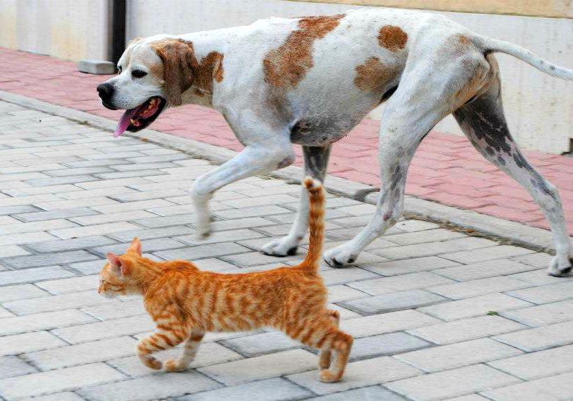 gerone e gatto