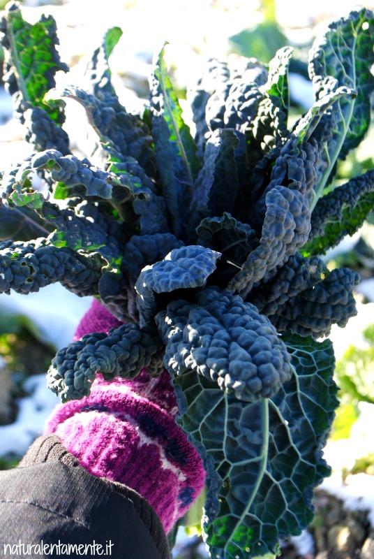 cavolo nero bouquet