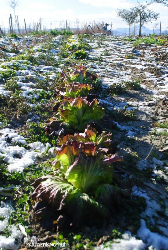 orto con la neve 2