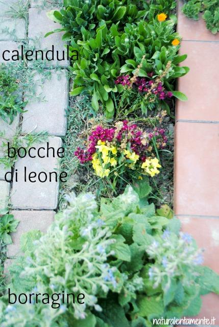 29 decrescita - aiuola fiorita